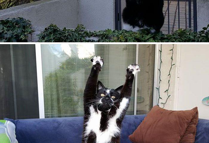 رفتار عجیب و غریب گربه ها