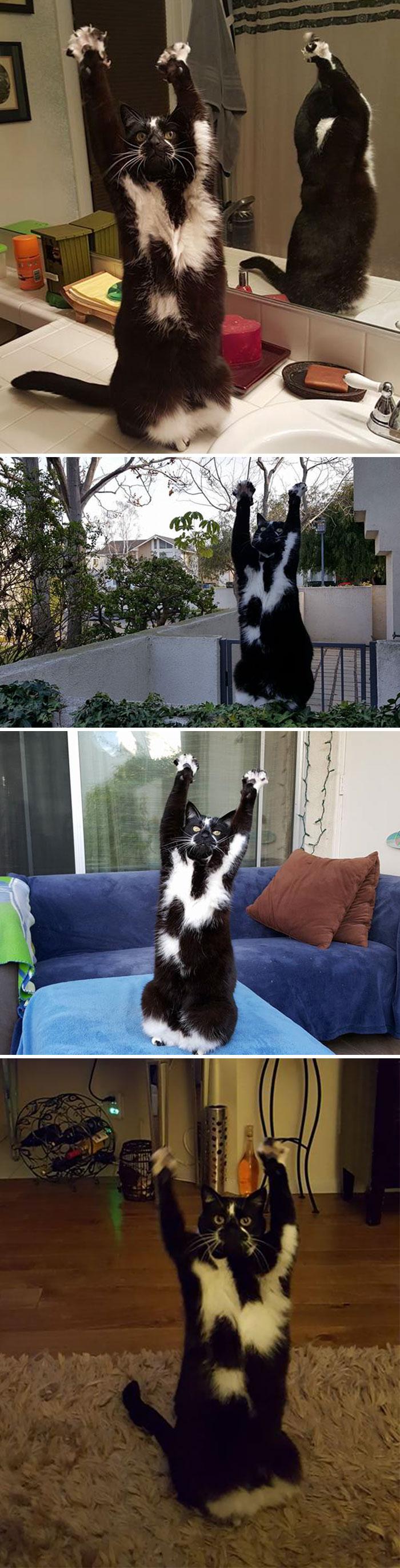عکس های از رفتار عجیب و غریب گربه ها در منزل را تماشا کنید !