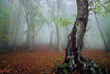 سفر به جنگل الیمستان ، پاییز منتظر شماست !