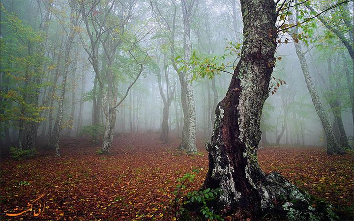 سفر به جنگل الیمستان