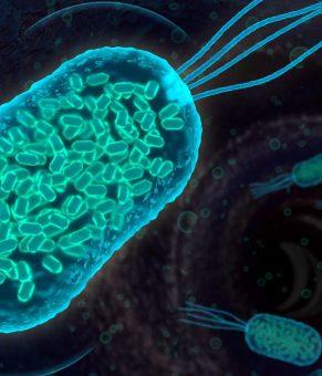 استفاده از صدا برای ردیابی ارگانیزم های کوچک در بدن !!!