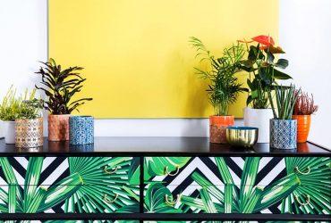 استفاده از گیاهان در دکوراسیون منزل !