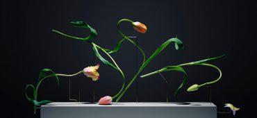 نمایشی ظریف و بی نظیر از رقص باله ی گل های لاله در ویترین