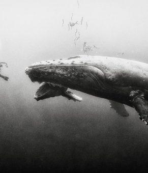 عکس های سیاه و سفید بسیار زیبا از دنیای زیر آب