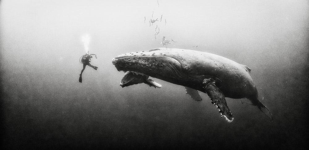 عکس های سیاه و سفید از دنیای زیر آب