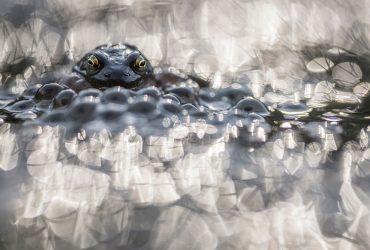 عکس های برگزیده مسابقات Macro Art Photography را تماشا کنید