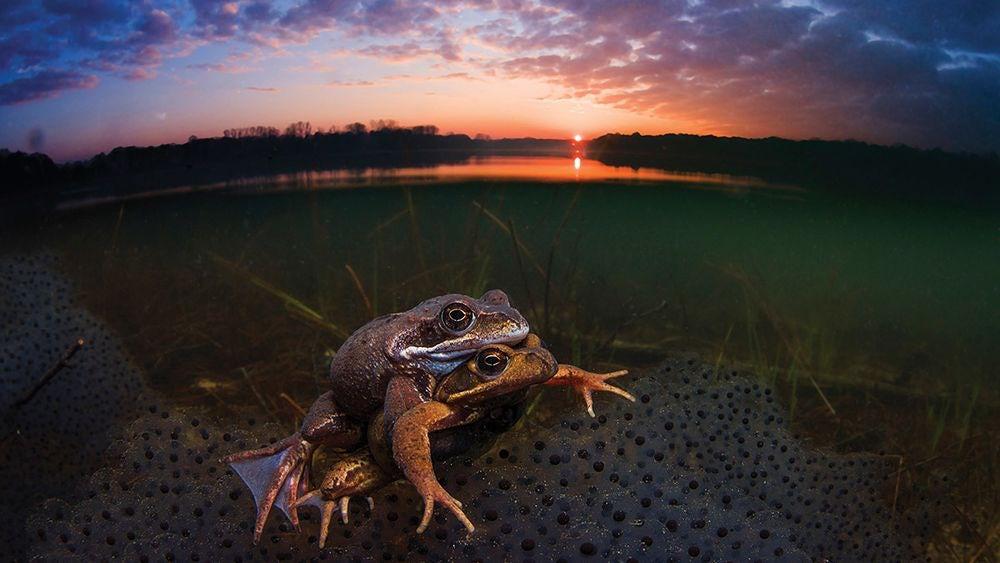 بهترین عکس های دنیای زیر آب 2018 در مسابقه عکاسی از نگاه لنز دوربین شما