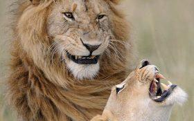 جالب ترین عکس های حیات وحش در جهان