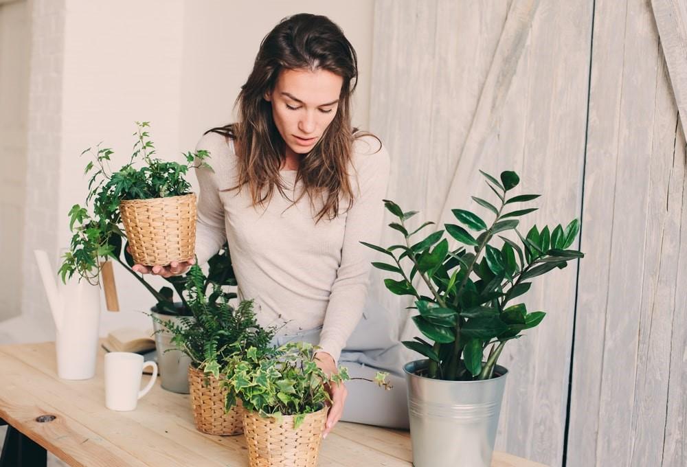گیاه آپارتمانی با نگهداری آسان