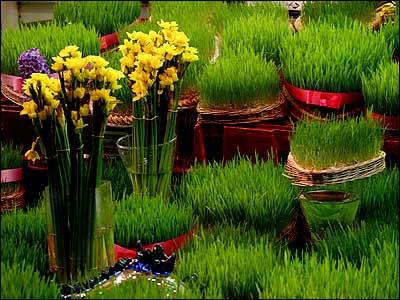 آشنایی با انواع سبزه و کاشت آن برای عید نوروز
