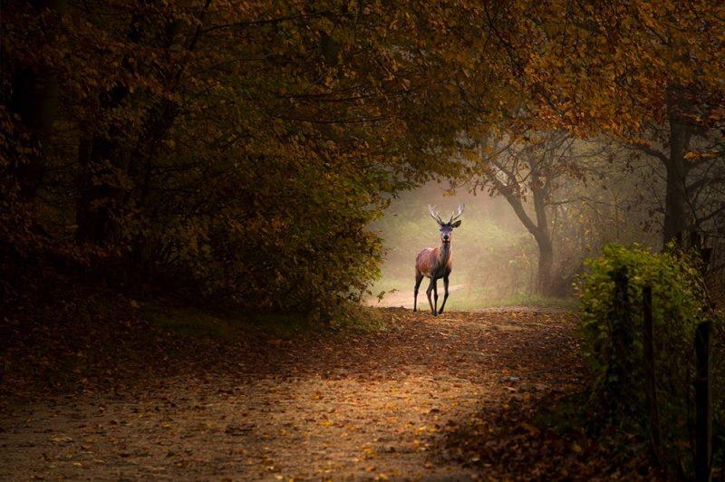 عکس : Chery Stephane عکس منتخب / دسته حرفه ای / بخش طبیعت