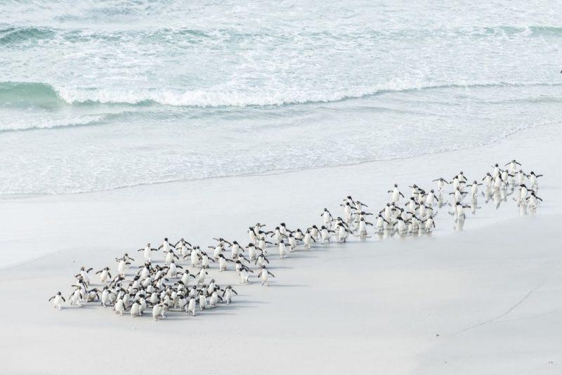 عکس : Usha Peddamatham عکس منتخب / دسته آماتور / بخش چشم انداز دریا