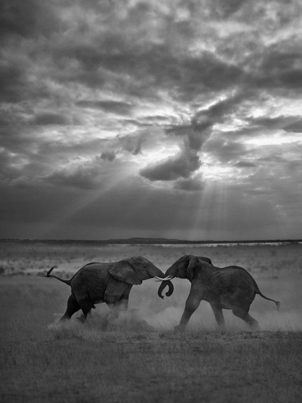 عکس Victoria Carlson عکس منتخب / دسته حرفه ای / بخش حیات وحش / حیوانات