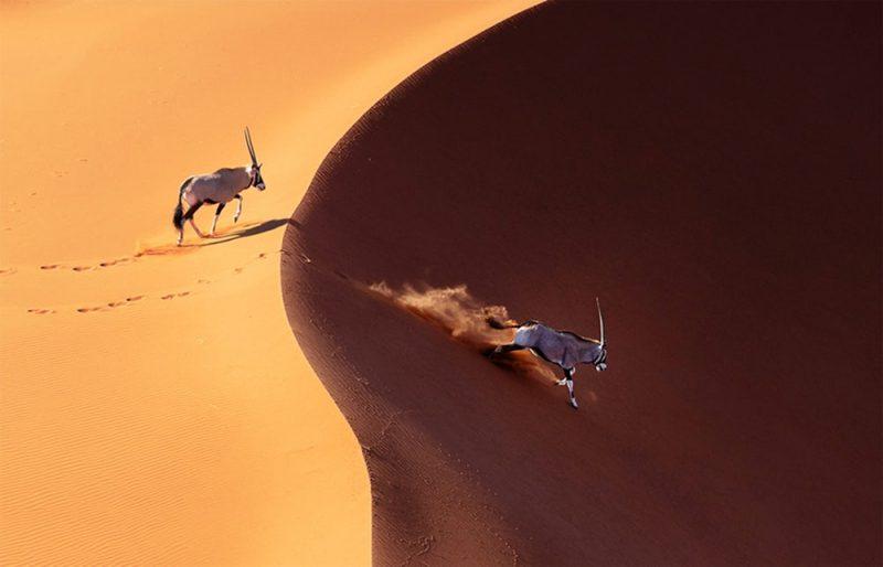 عکس Prince Eleazer  عکس منتخب / دسته حرفه ای / بخش حیات وحش / حیوانات
