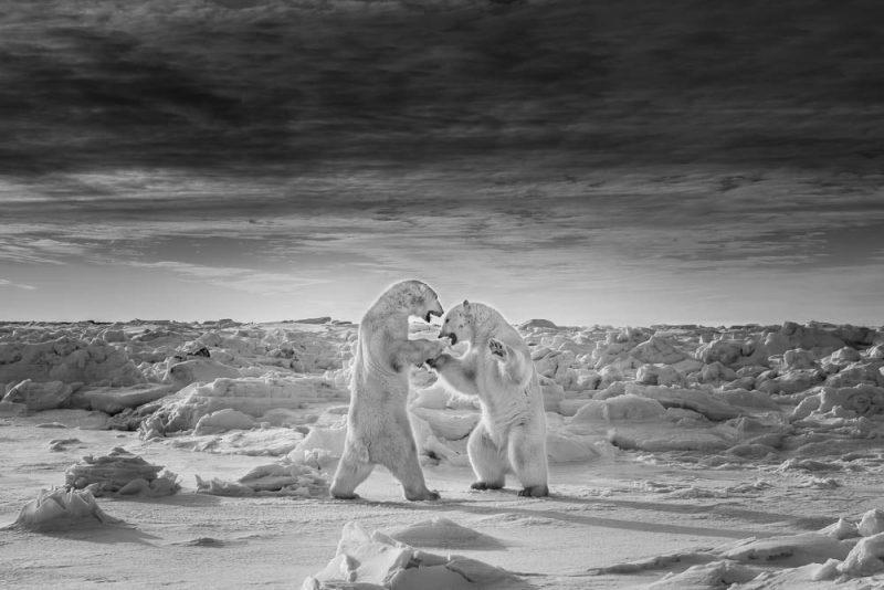 عکس Ernoult Alain  عکس منتخب / دسته حرفه ای / بخش حیات وحش / حیوانات