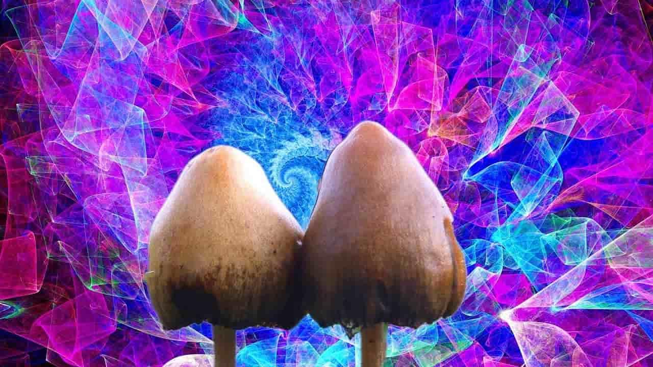 حقایق عملی ناگفته درباره مجیک ماشروم یا قارچ جادویی !