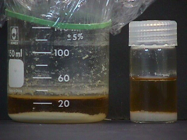 استخراج مایع سیلوسایبین / psilocybin