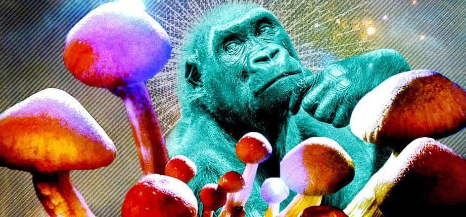 تئوری میمون نشئه / Stoned Ape