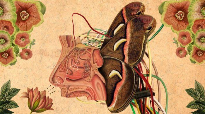 یادگیری بو کردن توسط ماشینها