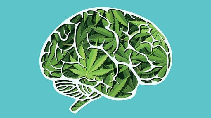آیا ماریجوانا باعث اسکیزوفرنی خواهد شد؟ روانپریشی در کمین نوجوانان