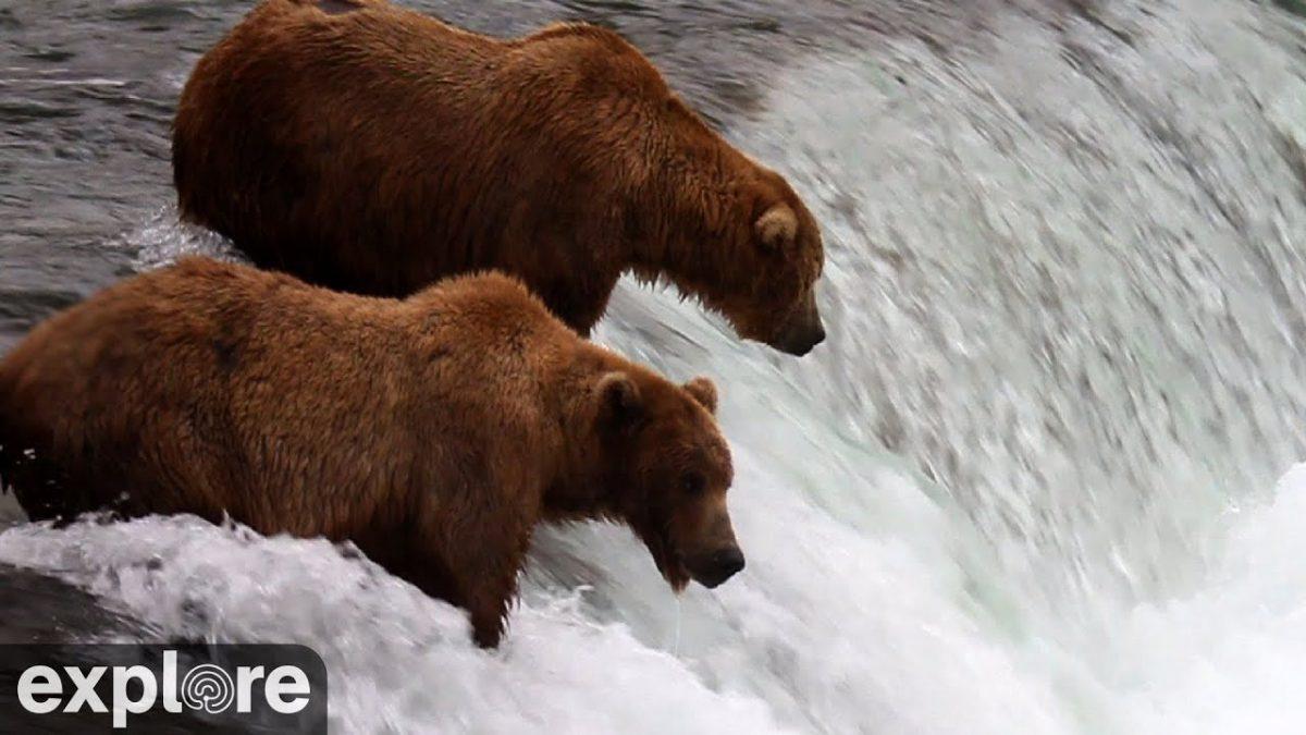 Explore بهترین وب سایت برای تماشای زنده طبیعت و حیوانات بصورت رایگان !!!