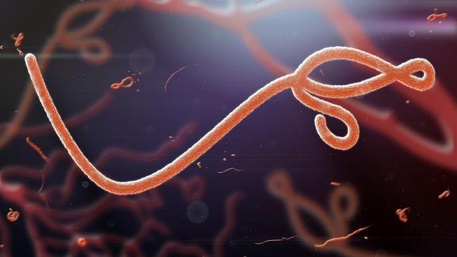 کشنده ترین ویروس های جهان