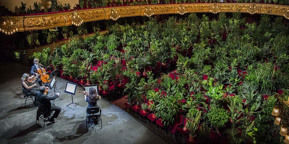 وقتی یک کوارتت زهی در اسپانیا برای گلدان ها مینوازد؛ کنسرت برای گیاهان!