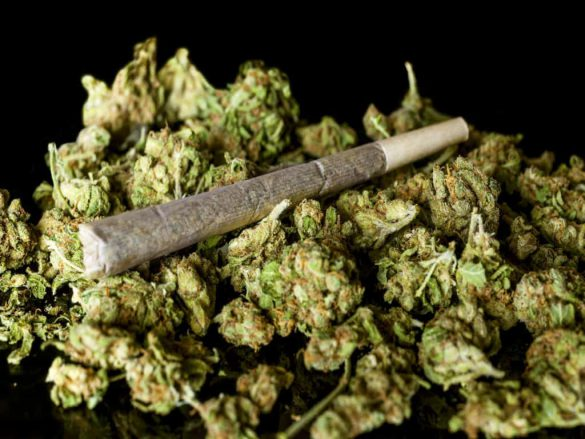 آیا ماریجوانا همان گل یا علف است؟