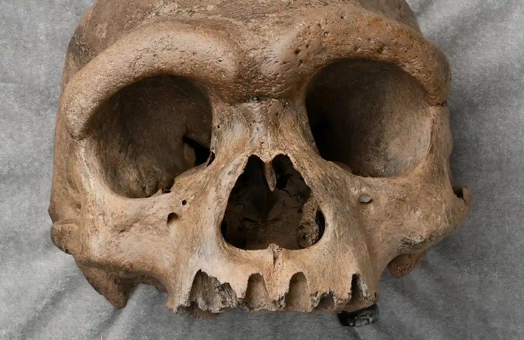 کشف جمجمه بزرگ انسان در چین نظریه های تکامل را برهم زد!